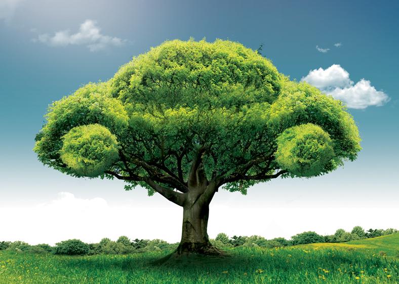 cómo ser un conductor ecológico
